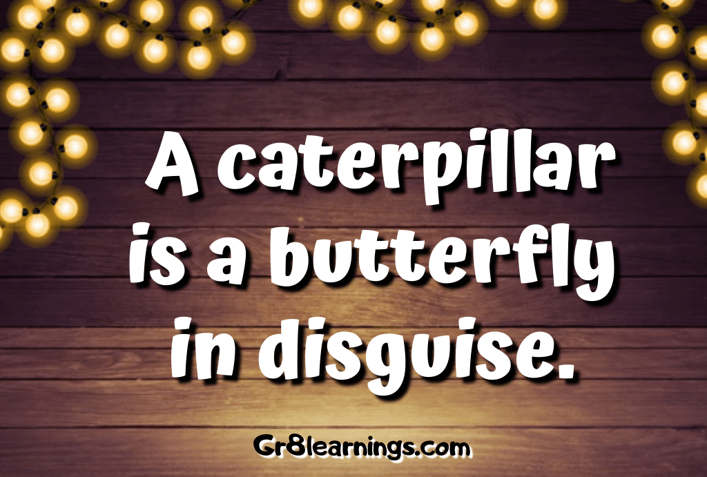 Butterfly Quotes